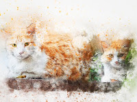 Jangan Larang! Pahami Dulu 6 Alasan Penting Kucing Hobi Mencakar