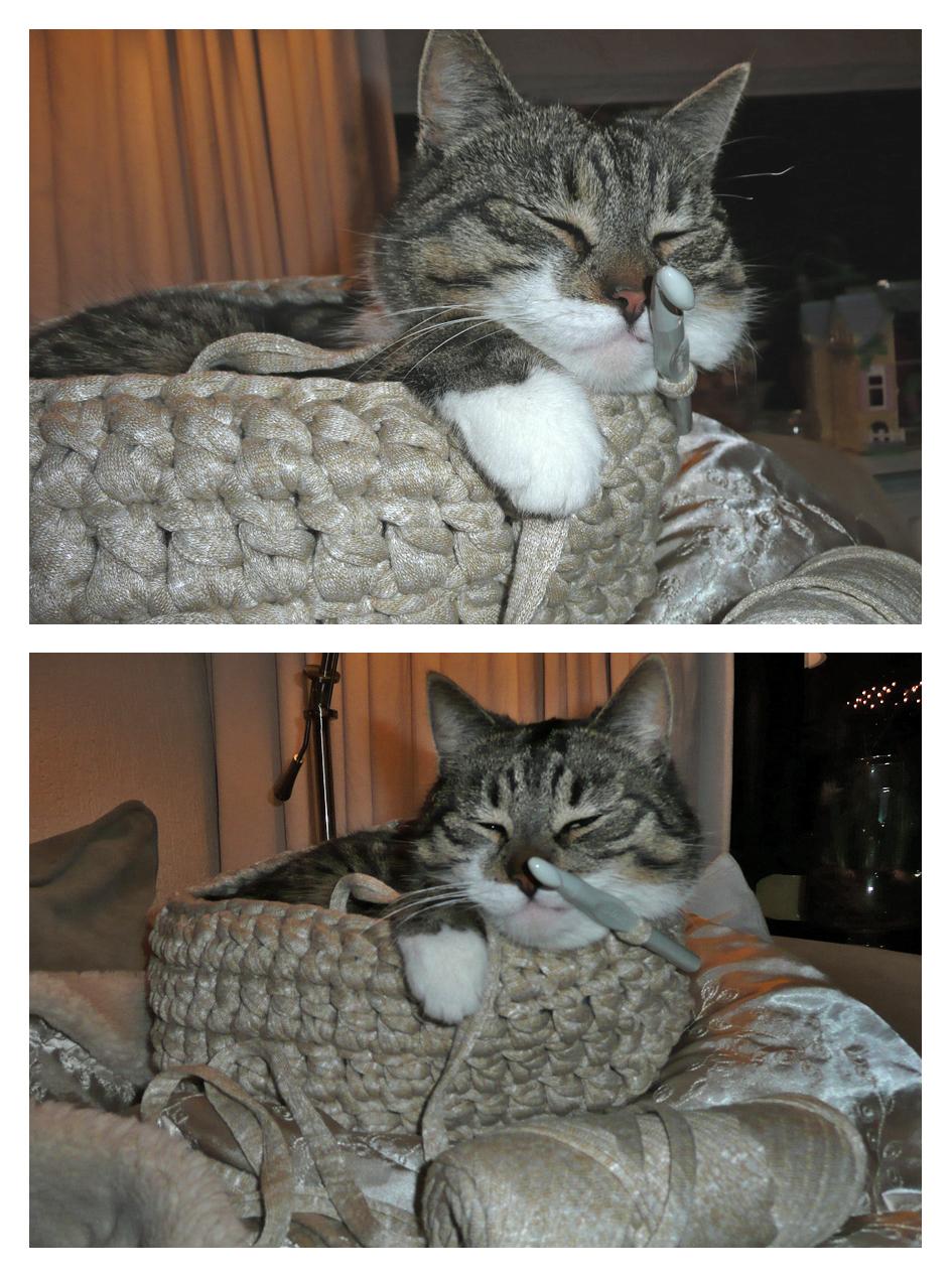 Ikkeismooi De Kat Is Ook Gek Op Haken