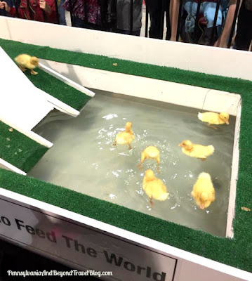 2017 Pennsylvania Farm Show Baby Ducks