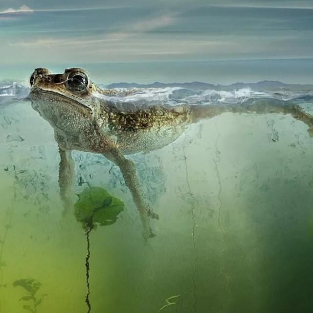 Frog Wallpaper Engine