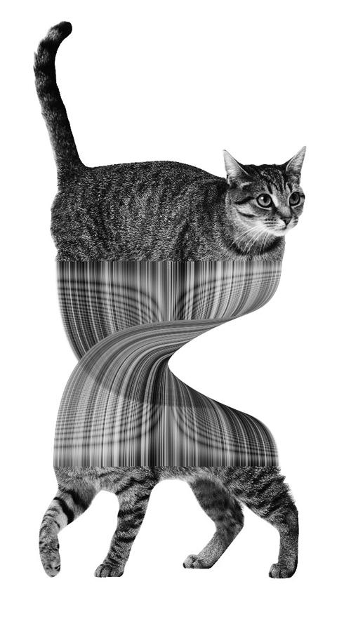 est100 一些攝影(some photos): Schrödinger's cat. 薛定諤貓/ 薛丁格貓