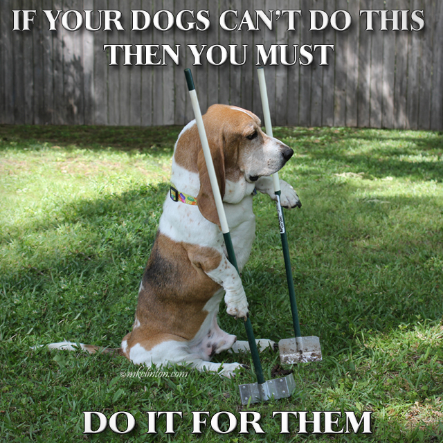 Basset Hound using a pooper scooper with meme. Copyrighted MKCLINTON