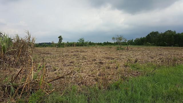 Dọn vườn chuẩn bị xuống giống 15.000 cây Tràm tại Làng Trường Thọ