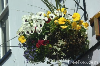 Image: Hanging Basket, by Ian Britton   (c) FreeFoto.com, licensed under Creative Commons Attribution-Noncommercial-No Derivative Works 3.0 License