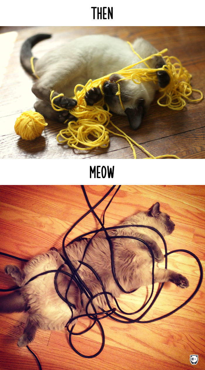 Then vs Meow How Technology Has Changed Cats' Lives (10+ Pics) - Getting Tangled