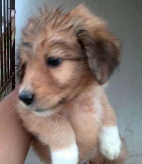 cachorros talla pequeña mediana 4