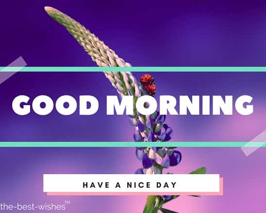 good morning flowers hd wallpaper