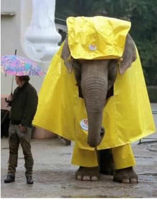 Very Funny Elephant Raincoat Picture Photo