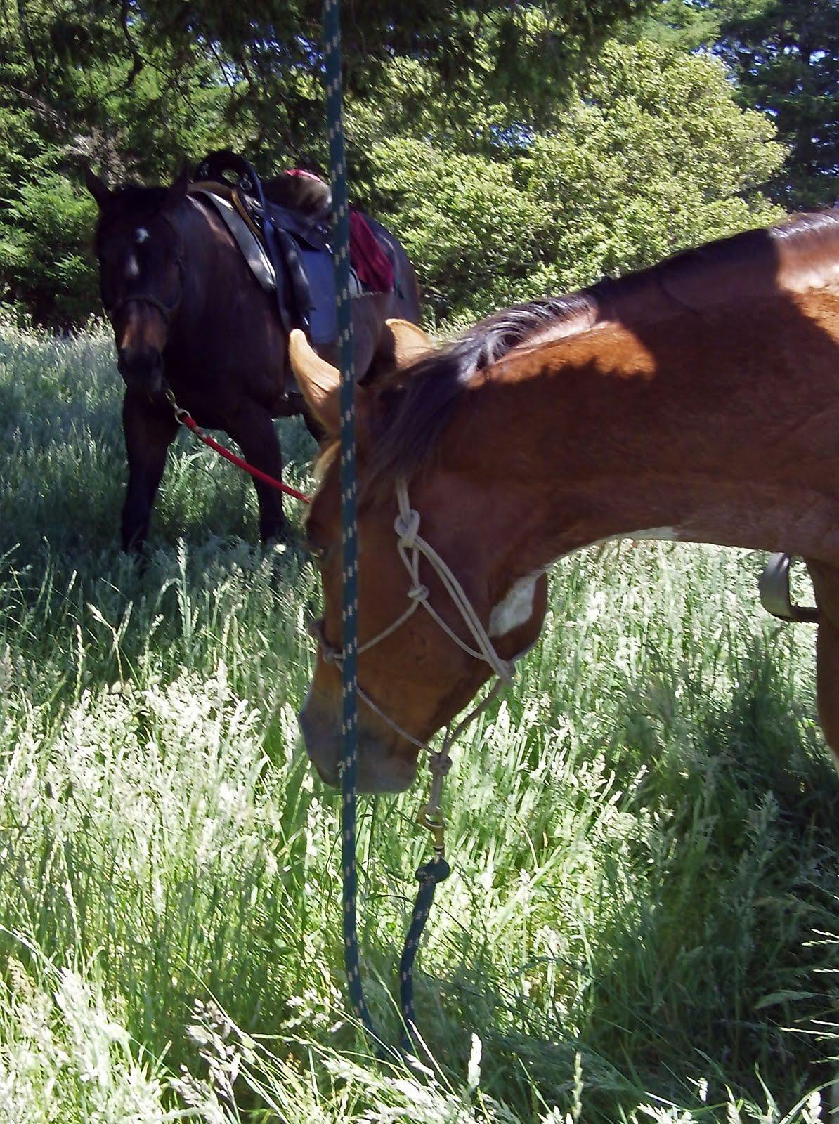 25 30 Helloo: Spotty Horse News: June 2011