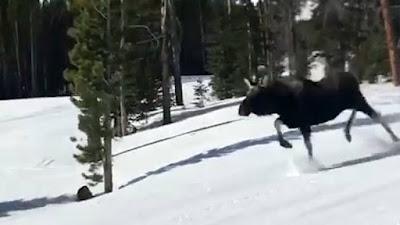 «Τρεχάτε ποδαράκια μου»: Άλκη καταδιώκει δύο snowboarders