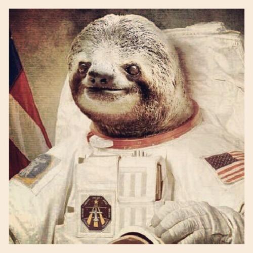 astronaut sloth meme - photo #24
