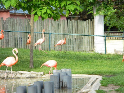 flamingos, wordless wednesday