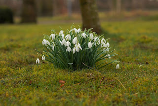 Image: Snowdrop Spring Flowers, by Karsten Paulick on Pixabay