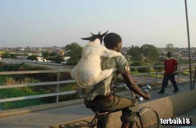 orang+dukung+kambing.jpg