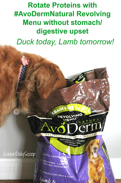 How to avoid food sensitivities and allergies with #AvoDermNatural Revolving Menu dog Food Trial #ad