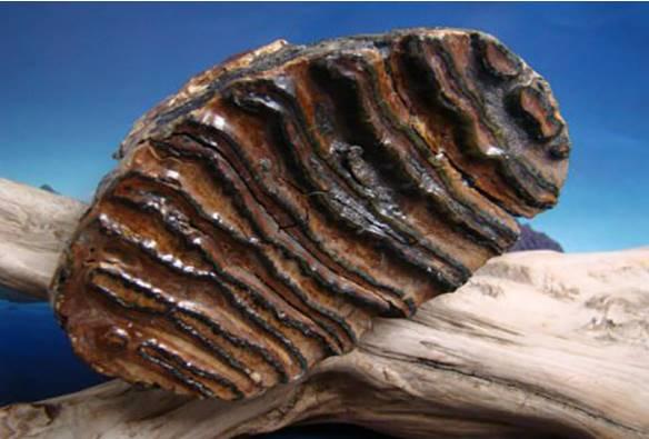Uno de los fósiles encontrados en el sitio
