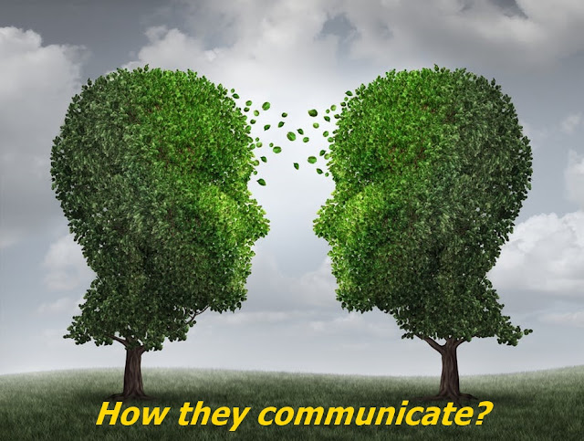 How trees communicate?