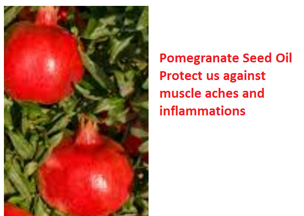 Health Benefits And Uses Of Pomegranate Seed Oil - Pomegranate Seed Oil Protect us against muscle aches and inflammations