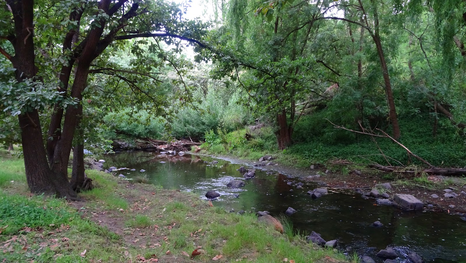 melbourne fresh daily merri creek clifton hill. Black Bedroom Furniture Sets. Home Design Ideas