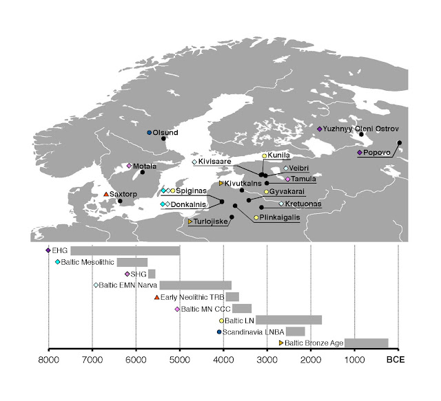 Northern European population history revealed by ancient human genomes