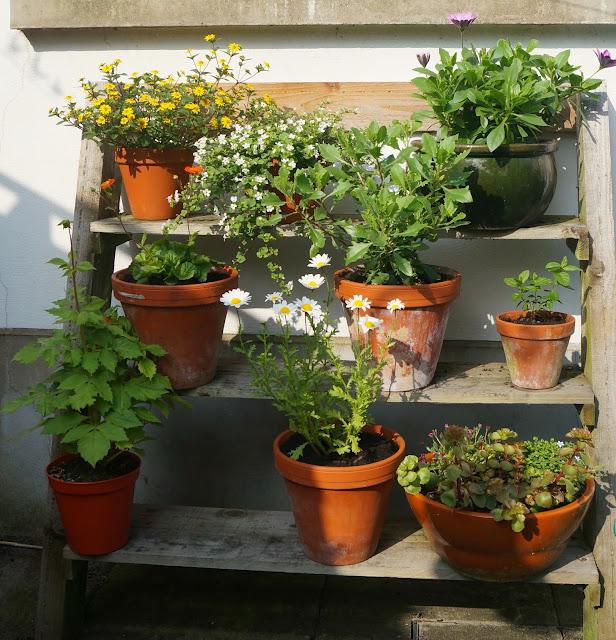 my tiered garden - wwwgrowourown.blogspot.com