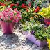8 Υπέροχα Λουλούδια που μπορείς να φυτέψεις σε γλάστρες στο Μπαλκόνι σου!