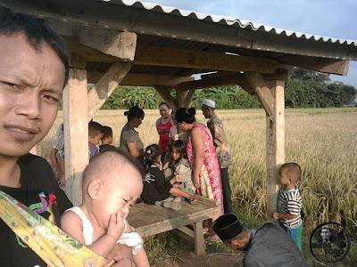 FOTO : Panen padi di desa Siluman.
