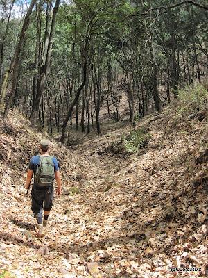 Bajando a la barranca del Tecuán