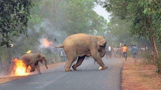 Foto Manusia Dikejar Gajah Ini Justru Dapat Penghargaan