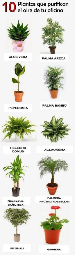 Principales plantas que purifican el aire y decoran la oficina