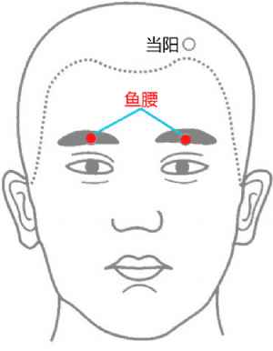 魚腰穴位   魚腰穴痛位置 - 穴道按摩經絡圖解   Source:zhongyibaike.com
