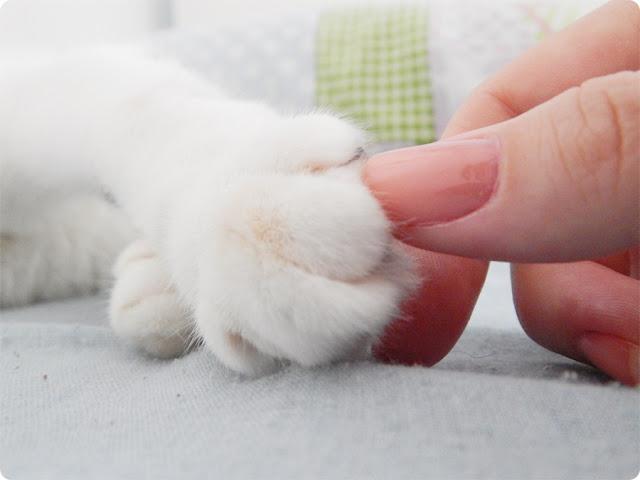 gatinho, gato fofo, gato com instagram, gato blog, jell e marcelo