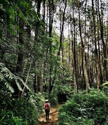 Hutan Pinus Curug badak & Curug Hanoman Tasikmalaya