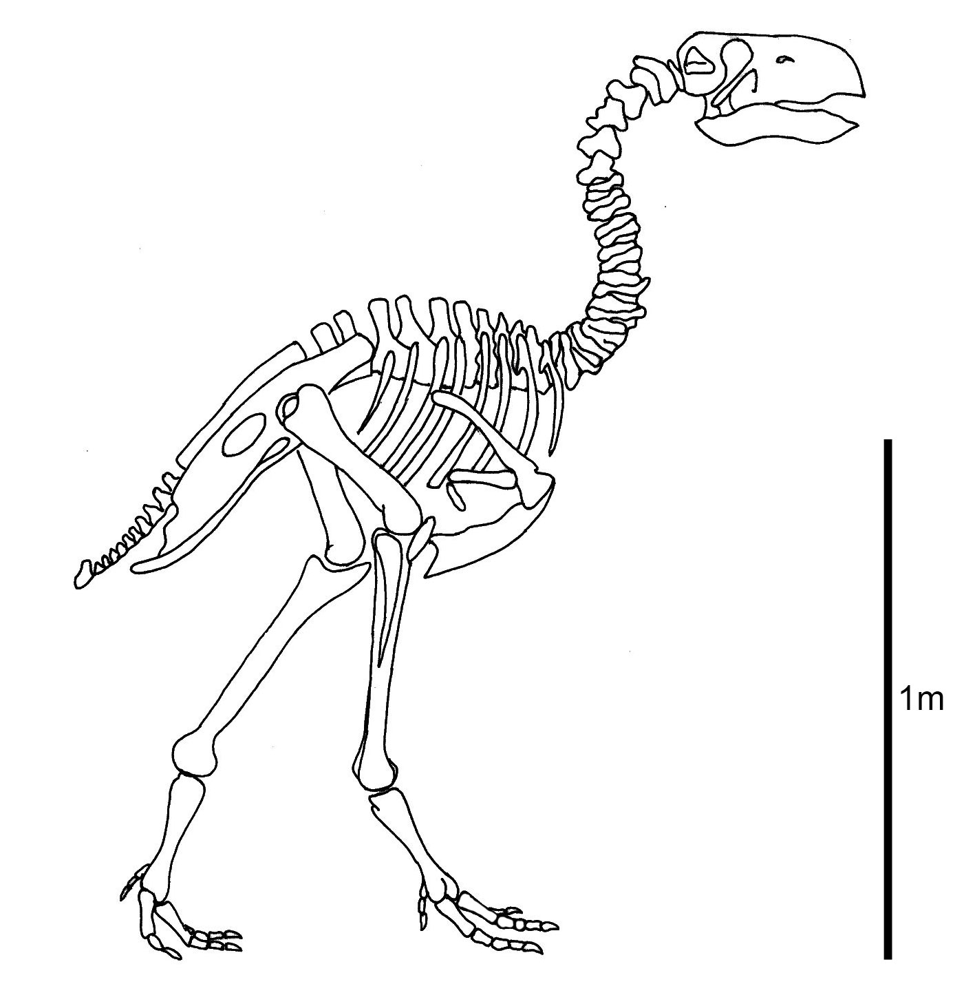 Research Suggests Terror Bird S Beak Was Worse Than Its