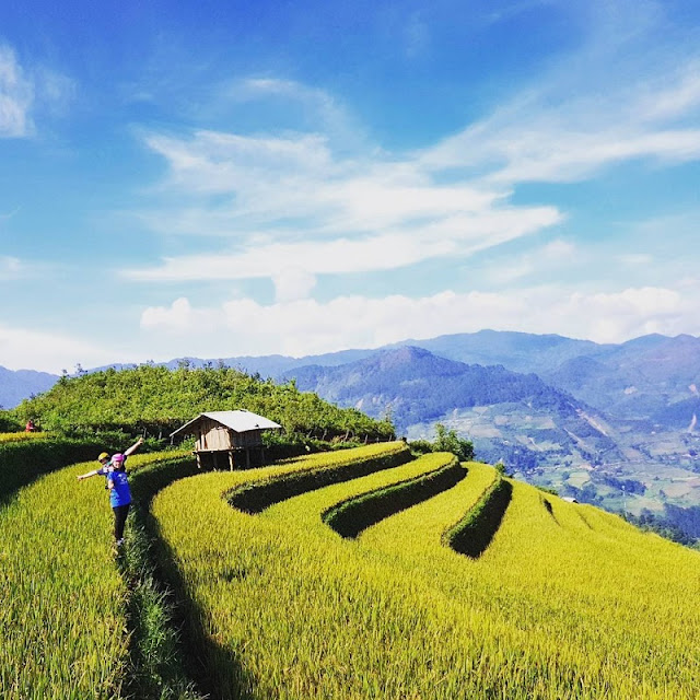 Terrced Fields In Mu Cang Chai in the Tourist eyes 1