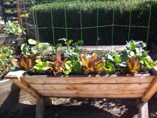 Ideas from the Garden Center by Sandy Hollingsworth