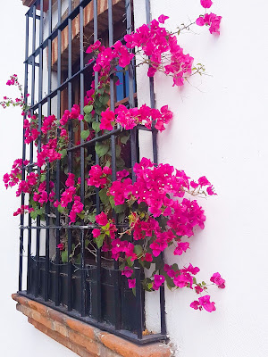 Flowers in the window Santo Domingo Dominican Republic