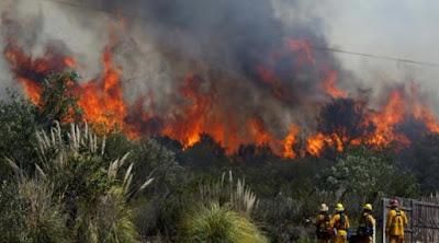 Gugatan Warga Dikabulkan, Jokowi Dinyatakan Bersalah Atas Kebakaran Hutan