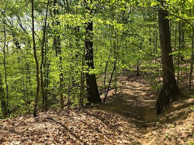 Photo of a dirt path through bright green trees.