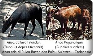 badak bercula dua sumatera indonesia 100 kata edi blog id