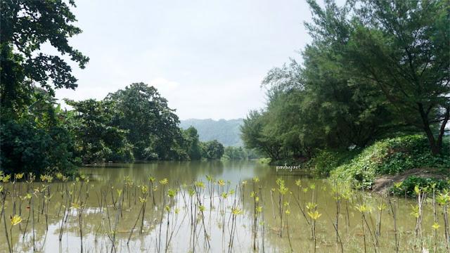 Kolam dengan Pembibitan Pohon Bakau di Pantai Jolosutro