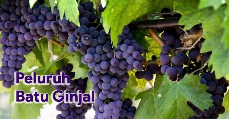 Meluruhkan Batu Ginjal Secara Alami Dengan Jus Anggur Hitam
