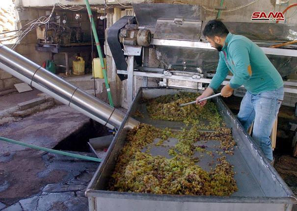 صناعةدبس العنبفي السويداء تقليد سنوي يتجدد مع نهاية قطاف موسم العنب(صور)