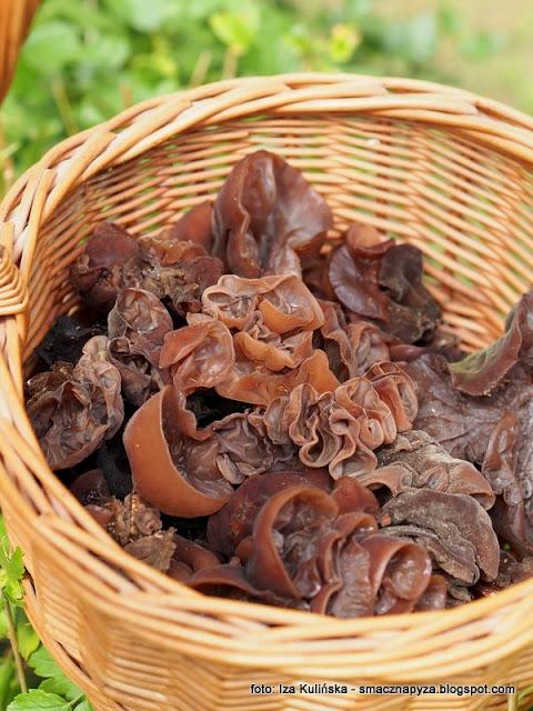 uszaki bzowe, grzybobranie, ucho bzowe,polskie grzyby mun, judaszowe ucho, na grzyby, jaki to grzyb
