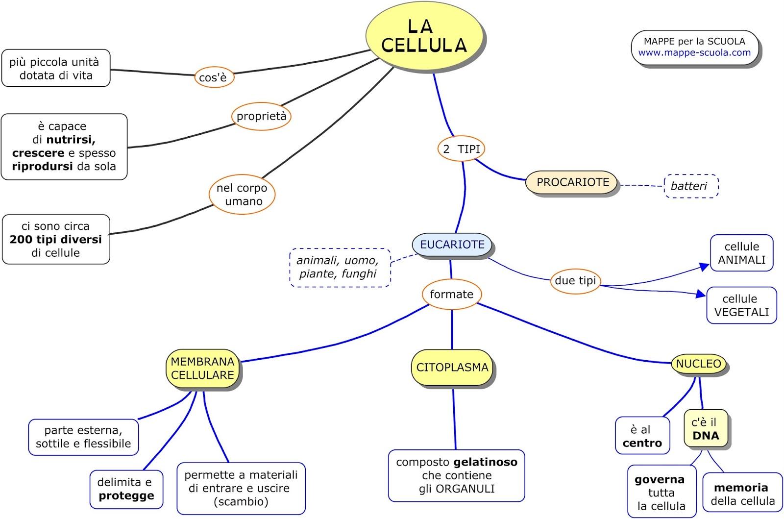 Eccezionale MAPPE per la SCUOLA: LA CELLULA, EUCARIOTA e PROCARIOTA MV25