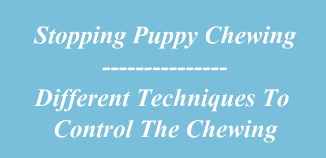 Stopping Puppy Chewing