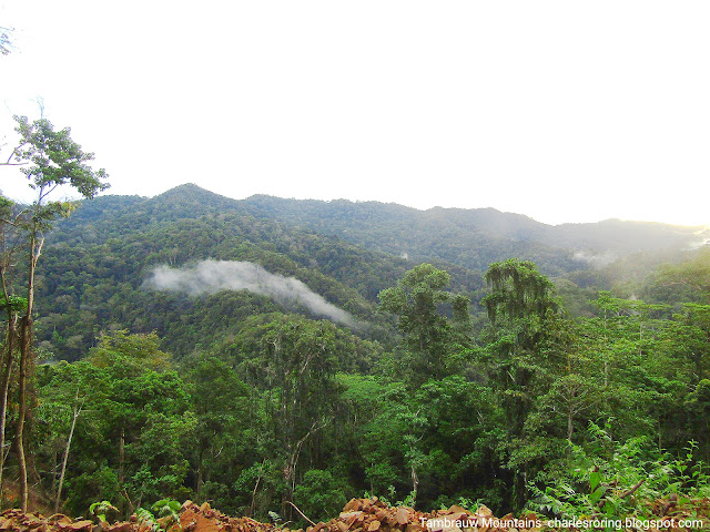 Rainforest in Tambrauw mountains