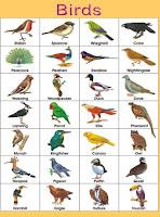पक्षियों के नाम