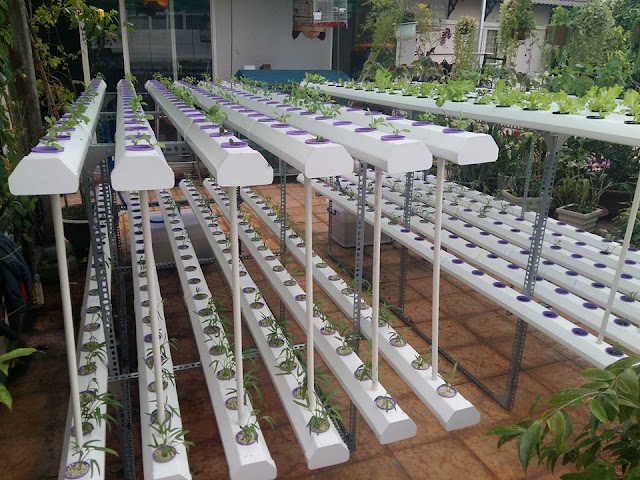 Thiết kế giàn rau thủy canh sân vườn