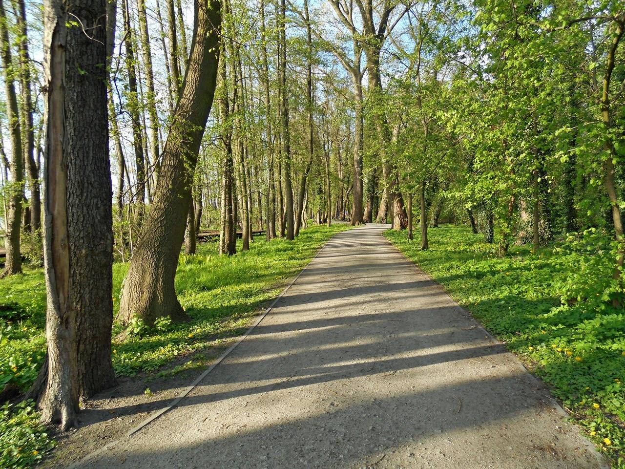 droga, drzewa, jezioro, zieleń, las
